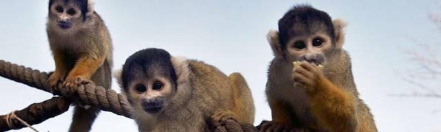 London Zoo Vouchers