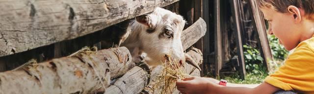 Marsh Farm Animal Adventure Park Vouchers