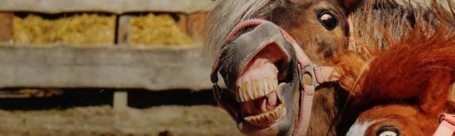 Robinsons Equestrian Discount Codes