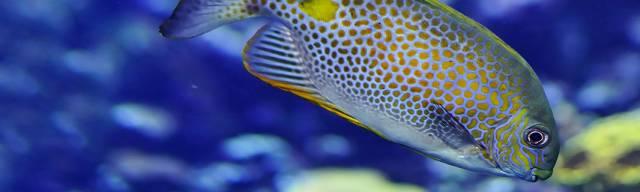 SeaQuarium Rhyl Discount Vouchers
